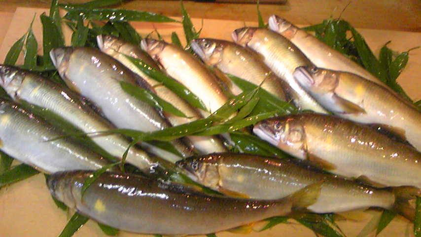 天然鮎(あゆ) 熊本の球磨川から天然鮎を仕入れています☆ 朝、連れた鮎をすぐに送っても... 天